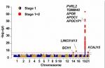 研究团队找到多个与阿尔兹海默症相关的新遗传风险基因,为日后诊断及治疗提供重要基础。 - 香港科技大学